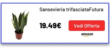 Sansevieria trifasciataFutura Superba | Pianta del serpente | Lingua di suocera | Altezza 30-40 cm | Vaso-Ø 12 cm