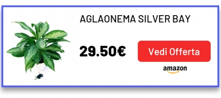 AGLAONEMA SILVER BAY