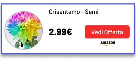 Crisantemo - Semi