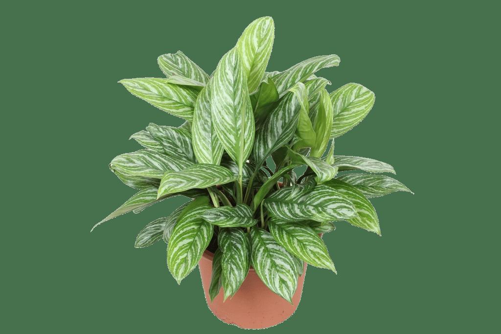piante approvate dalla NASA